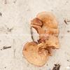 Mushroom in sand.