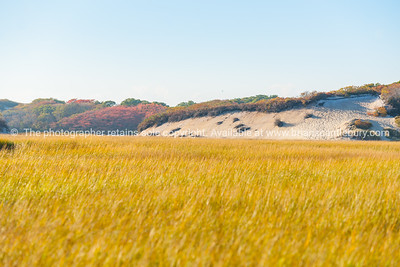 Long Point Marsh, Massachusetts, National Seashore,