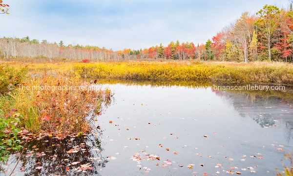 Autumn colors surround calm pond.