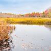 Autumn colors surround calm pond.