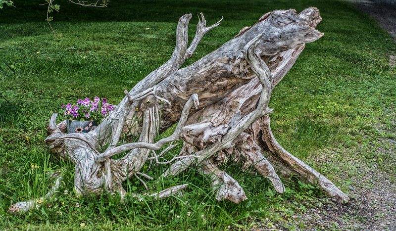 • Location - The Inn At Whale Cove in the Grand Manan Island<br /> • I thought was an interesting looking set  of tree dead branches