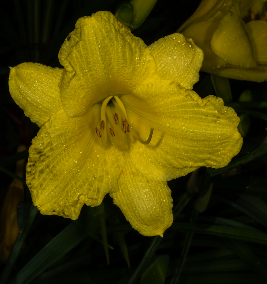 • Location - Hilton Gardens Inn at Banger, Maine<br /> • Day Lily