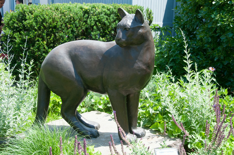• Location - Town of Kent CT<br /> • That's one big cat! :=)