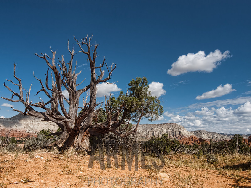 Shakespeare Arch Trail, Kodachrome Basin State Park, Utah