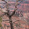 Bright Angel Point, North Rim, Grand Canyon, Arizona