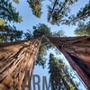 Kings Canyon & Sequoia National Parks, California