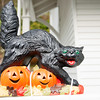 Black cat snarling while walking over jack o lantern face cutouts