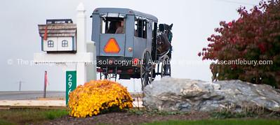 Amish Buggy.