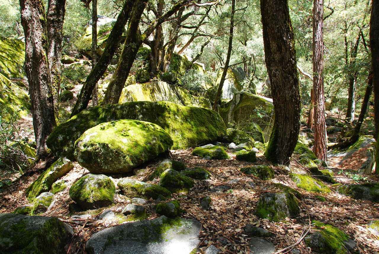 Upper Yosemite Falls trail,  Yosemite NP,  CA