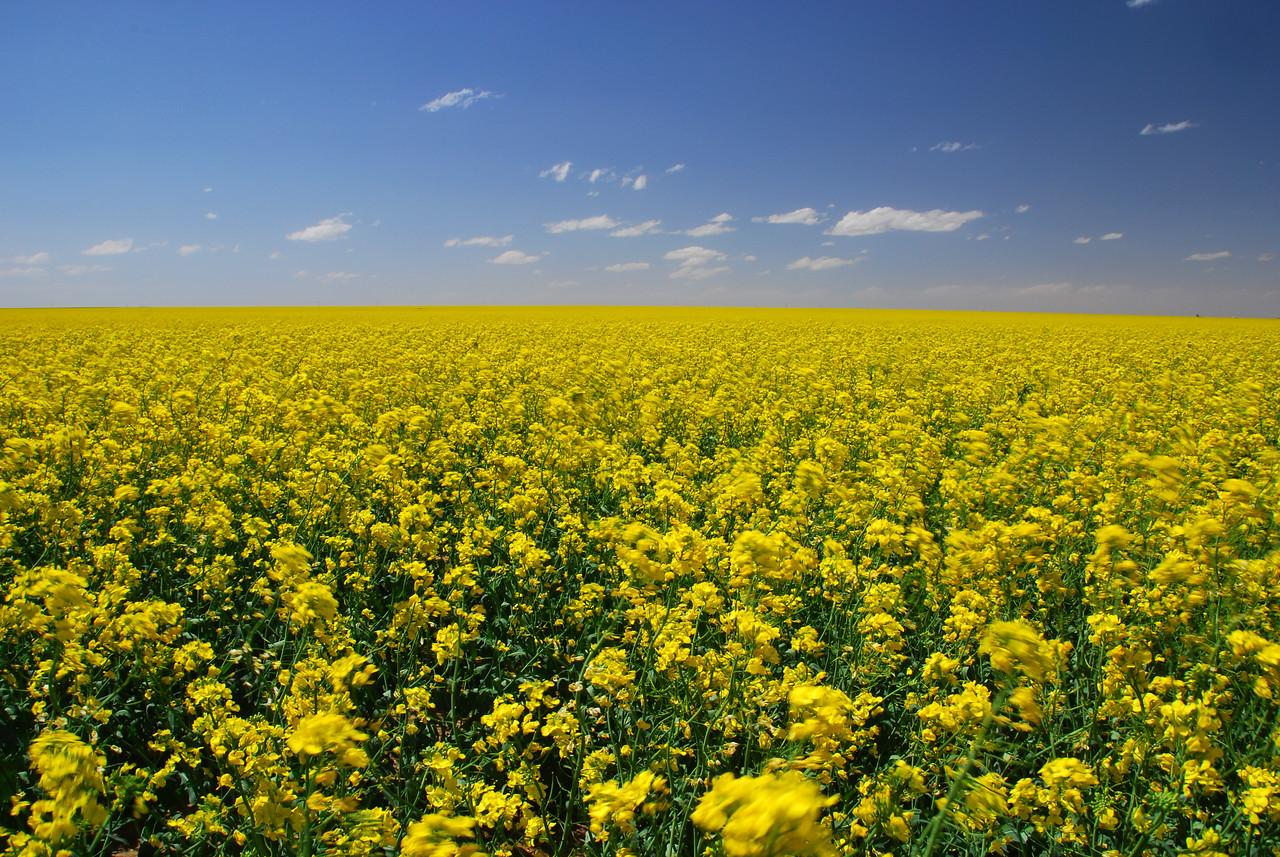 Fields of Oklahoma