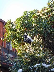 raven on tree