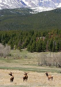 Long Peaks, Rocky Mountains. Peak to Peak Highway, Colorado, USA.