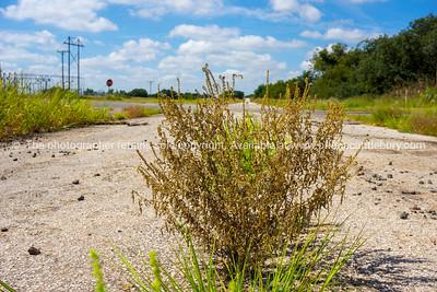 Route 66 road disrepair.