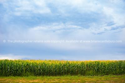 Cornfields along Route 66, Texas, USA