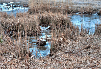 In The Iona Reserve Swamp