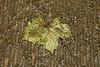 Getty Center- Leaf in water