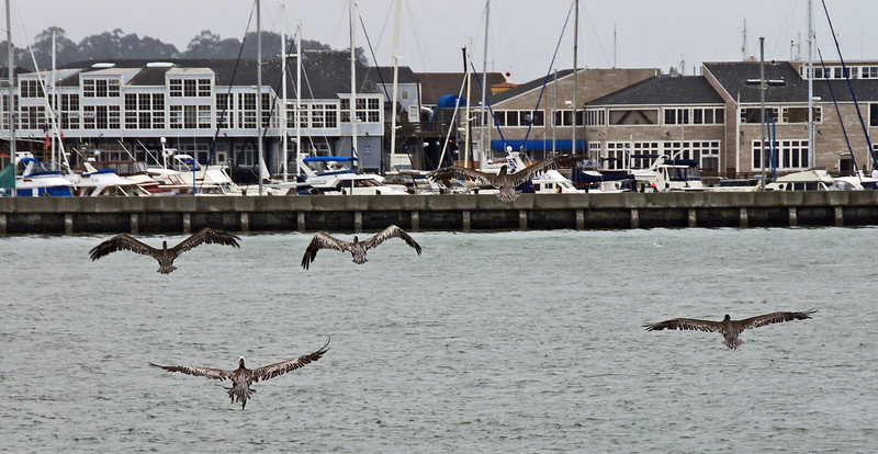 I couldn't resist taking this photo of seaguls flying on the waters of San Francisco Bay.
