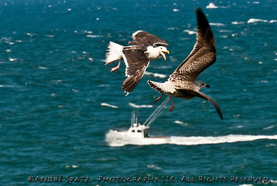 Montauk Point State Park: - Dont mess up with me!