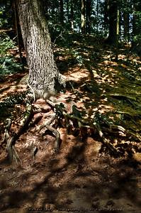 Old Sturbridge Village forest