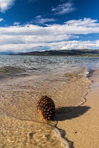 Pinecone at Lake Tahoe