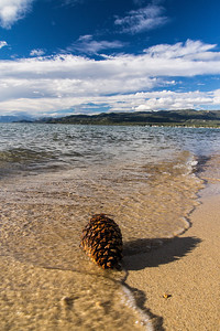 Pinecone at Lake Tahoe