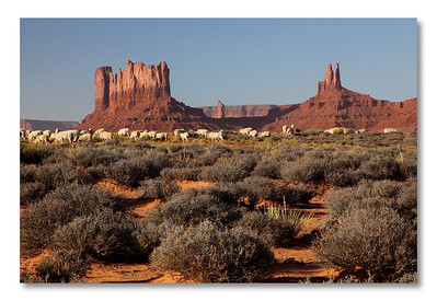 We are in Monument Valley!  The sheeps were guarded by two dogs. When I approached to close, they move the troups away! Amazing dogs.