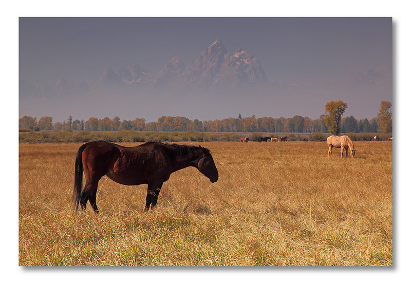 Can you recognize the mountain in the background? <br /> A hint: it was taken in Grand Teton NP.