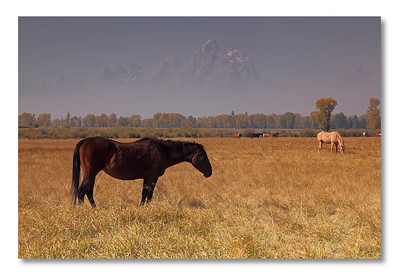 Can you recognize the mountain in the background?  A hint: it was taken in Grand Teton NP.
