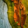 Madrona bark (Arbutus menziesii)
