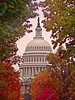 USA - DC - Capitol Hill - dome - framed by foliage
