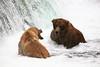 Grizzly Bears at Brooke Falls, Katmai NP, Alaska, USA