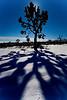 USA-Nevada  Joshua Tree IMG_8794