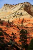 USA- Zion National Park IMG_7693sm