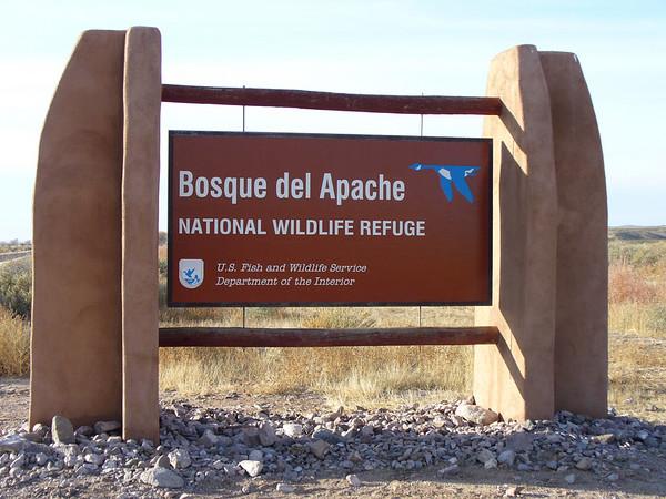 2008 11 Bosque Del Apache, NM