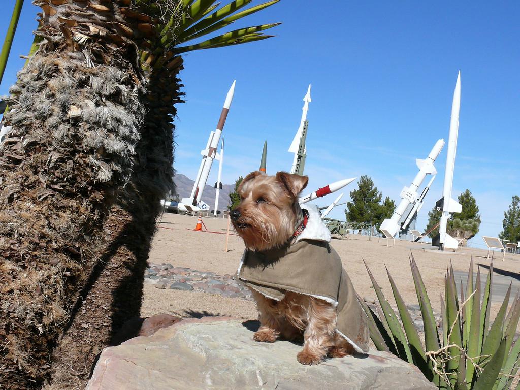 Shadow, our little Devil Dog on guard at White Sands Missel Range.