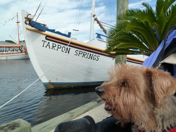 2012 10 Tarpon Springs