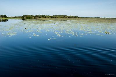 вода в озере практически черного цвета