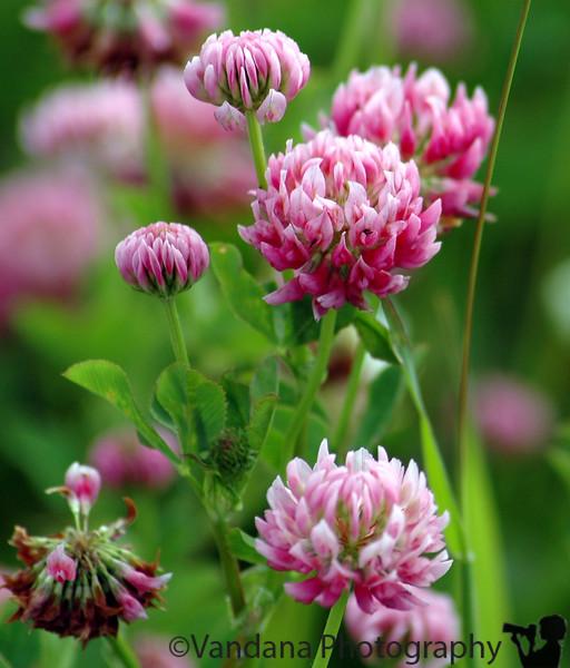 Alaskan wildflowers