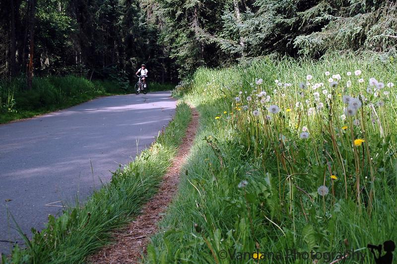 biking the Tony Knowles, Anchorage