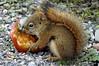 squirrel - abundant such wildlife in Denali