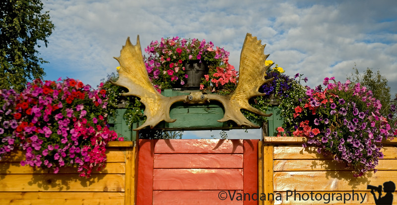 Colorful gates greet us. Stay close to Denali  national park  for a early morning trip into the park the next day