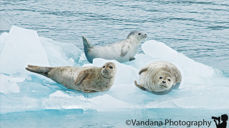 The seals are supposed to be skittish, so we're very quiet as the ship sails by them.<br /> at Prince William Sound, Alaska