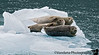 But not before we spot these seals on an iceberg.