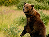 Spend some time at Alaska Wildlife Conservation Center, Anchorage with the bears. Bye, grizzly ! see you sometime again !