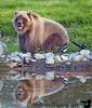 baby bear at Alaska Wildlife Conservation Center
