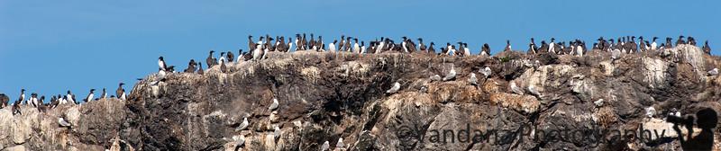 on Gull island near Homer, AK