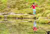 Reflections at Summit lake.<br /> There was a full blown photosession at this lake. A professional photographer with tons of equipment & a model ( ? ) in his truck took lots of shots while we waited patiently. It was fun watching a guy pose :) V making fun of his postures.