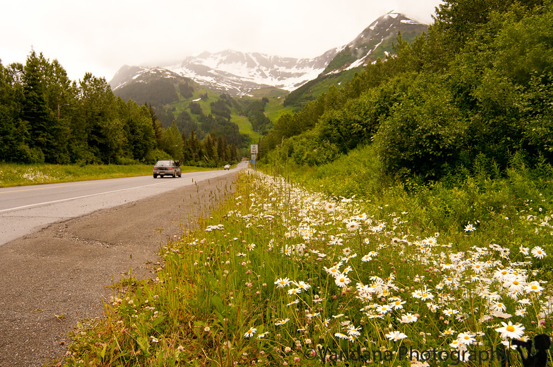 July 6, 2010 - Today we checked out from the Alyeska resort. A long drive to Glennallen ahead of us. This is Girdwood right here by the roadside.