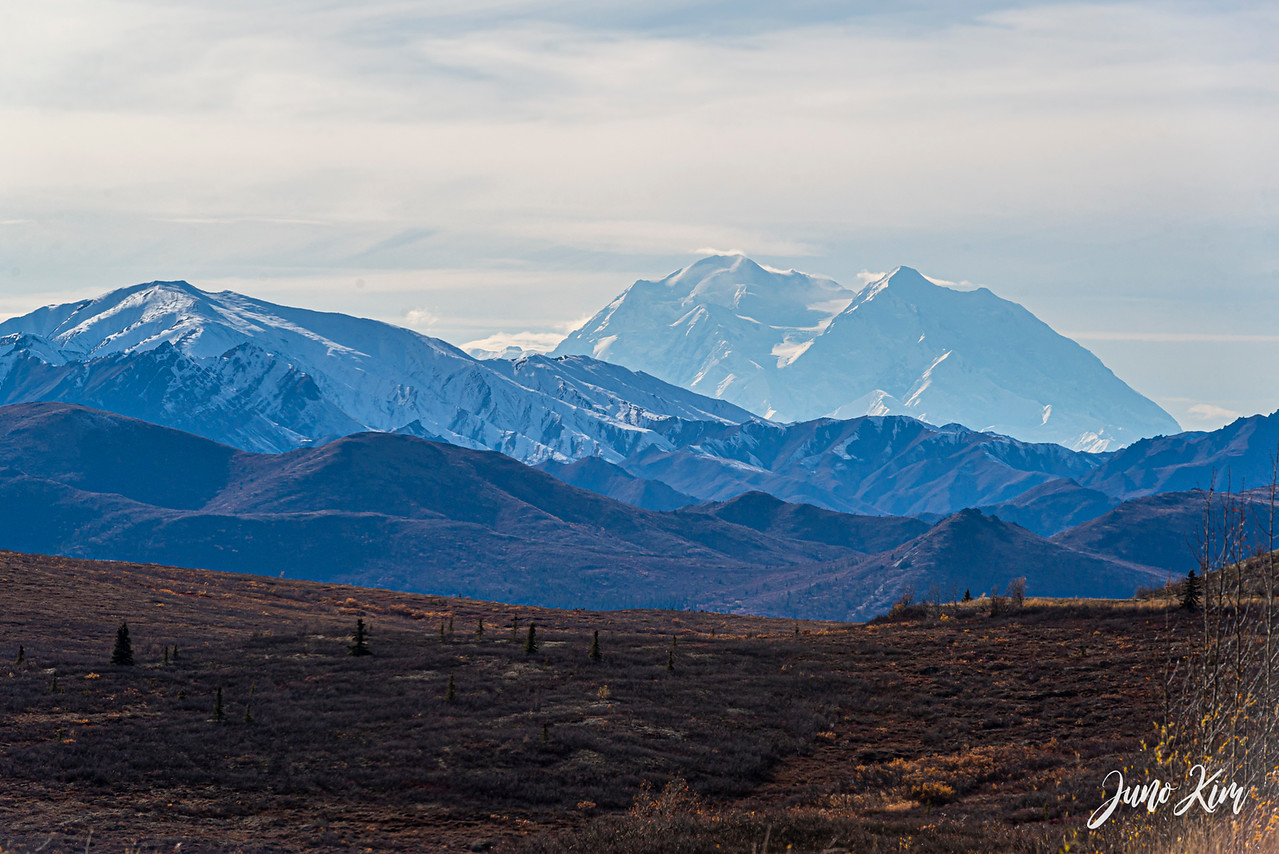 View of Denali from Denali National Park's Park Road Mile 9