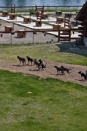 Home and kennels of  four-time Iditarod champion Susan Butcher